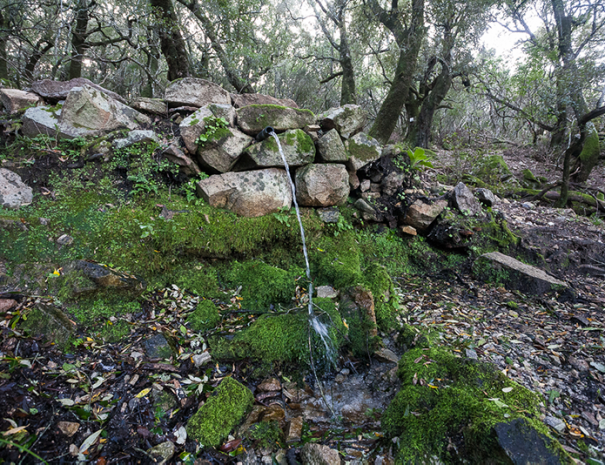 Sentiero nel bosco per Sa conca Isteddata